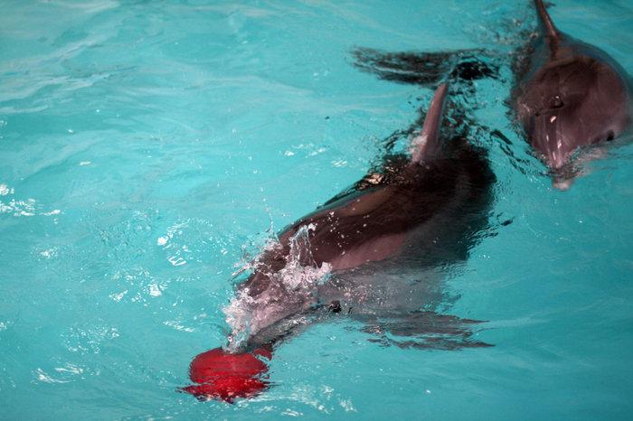 дельфины в Утришском дельфинарии