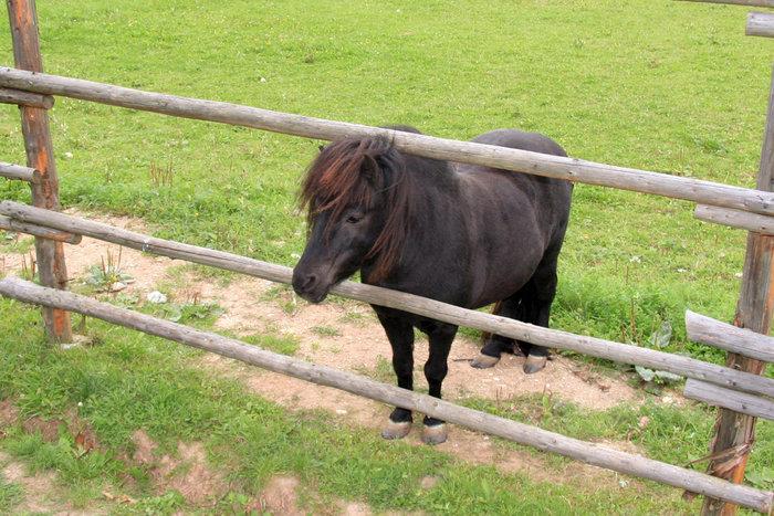пони в небольшом парке Литвы