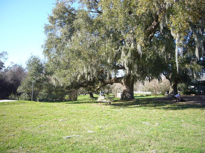 Огромные деревья увешаны мхами.