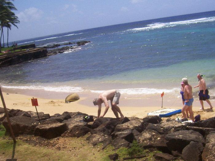 На берег выбросило дельфинов