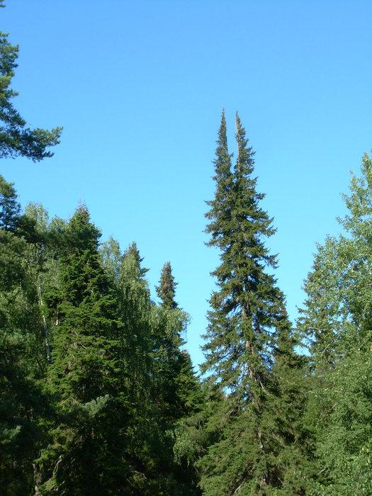 Даже деревья на острове причудливой красоты.