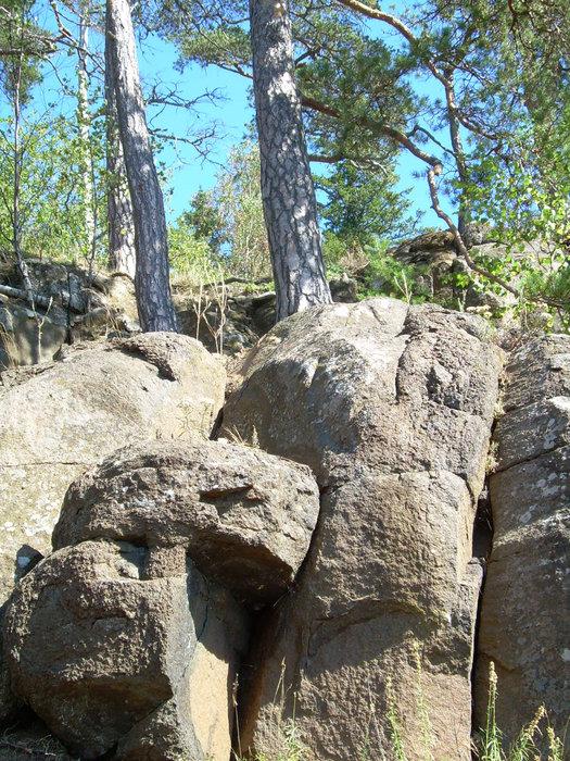 Естественный грунт. Почва на острове в основном привозная.На таком тоненьком слое почвы растут такие красивые деревья.