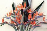 цветок райская птичка — визитная карточка Канарских островов