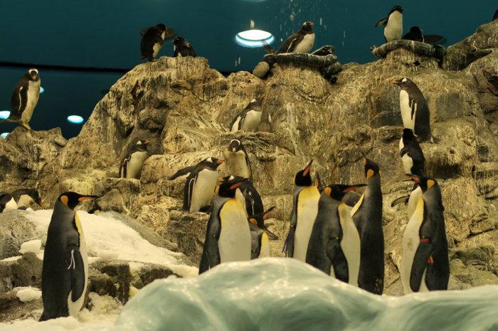 пингвины в Лоро Парке