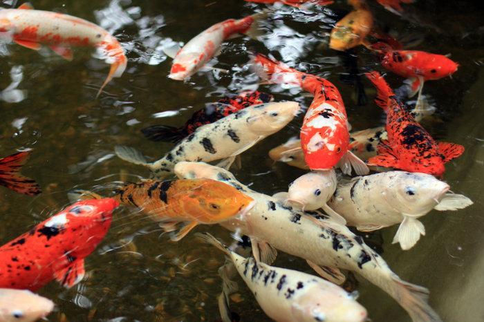 рыбки в Лоро Парке
