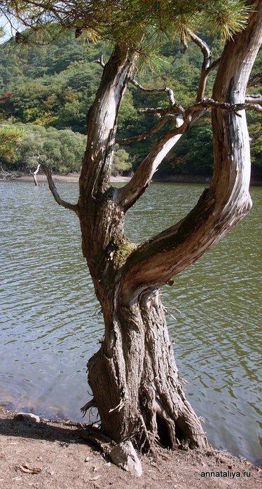 Дерево на пруду