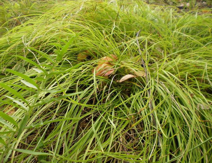 Спрятались грибочки под травой