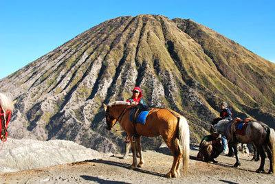 Лошадки на Бромо