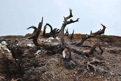 Деревья на Кава-Иджен
