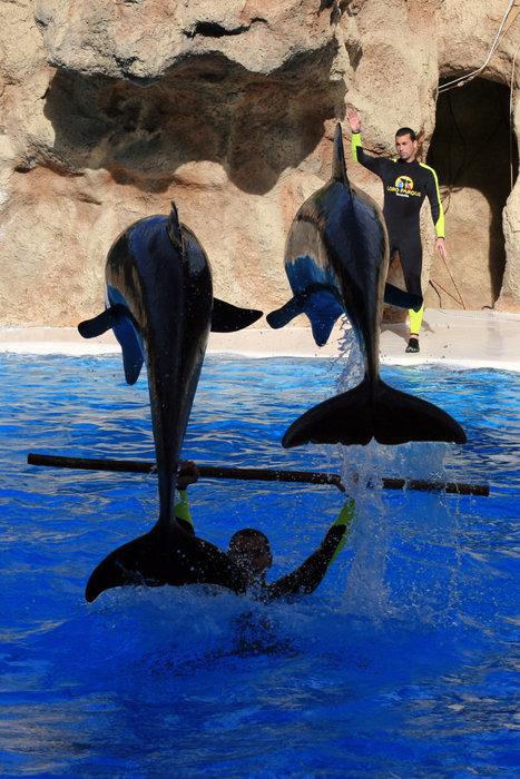 шоу дельфинов Пуэрто-де-ла-Крус, остров Тенерифе, Испания