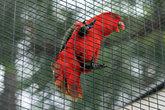 попугай в Лоро Парке