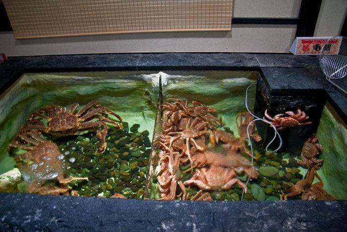 Бассейн с крабами в ресторане Кифу...