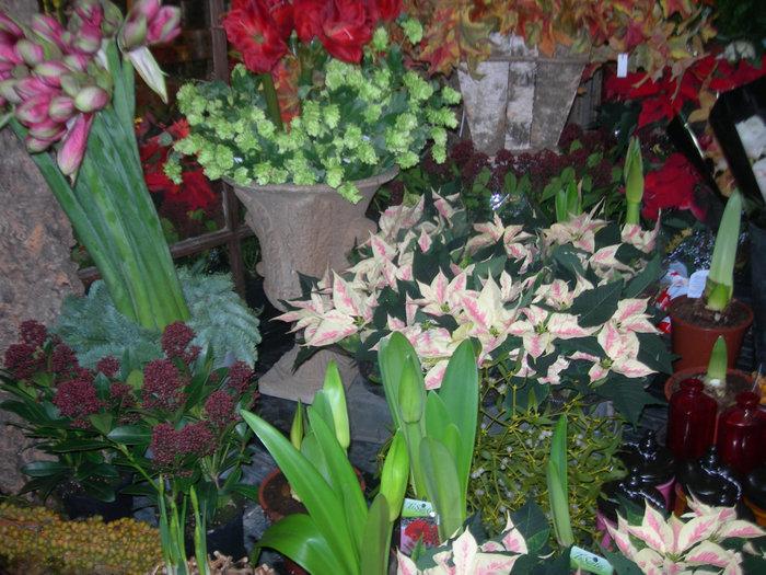 Рынок цветов