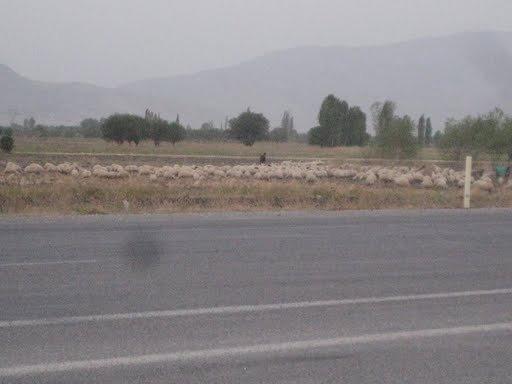 Пастухи пасут овец