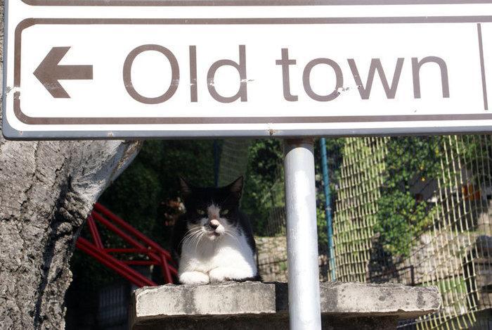 В тени указателя — уличная кошка в Херцог Нови