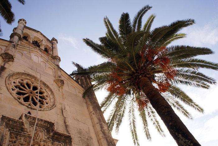 Собор и пальма в Херцог Нови