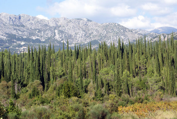 А на нейтральной полосе — елки и горы (на границе Черногории и Хорватии).