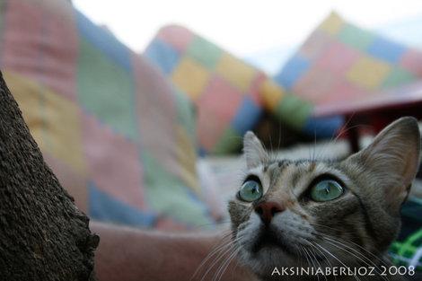 коты охотятся все время :)