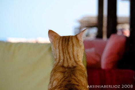 дахабские коты