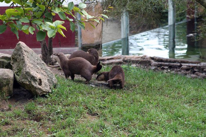 Выдры. Их там очень много, и они очень забавно суетятся постоянно. Милые животные.