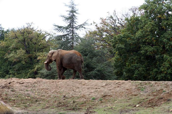 До слона метров 20. Максимум.