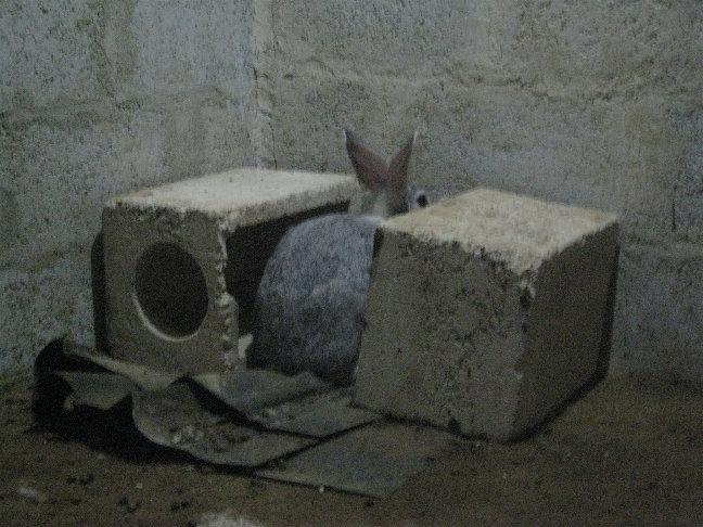 Кролики от нас все время убегали и отказывались общаться.
