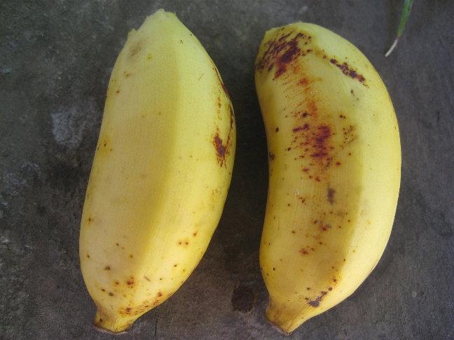 Бананы размером с зажигалку