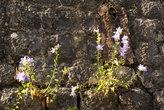 Цветы на камне