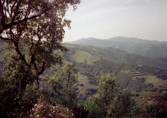 Леса, горы, ручьи, птички, грибочки... Всё это Северная Африка!