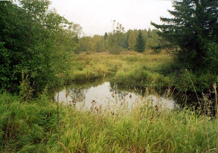 Среди непролазных болот и