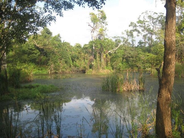 А рядом со рвом кое-где можно наткнуться на болота.