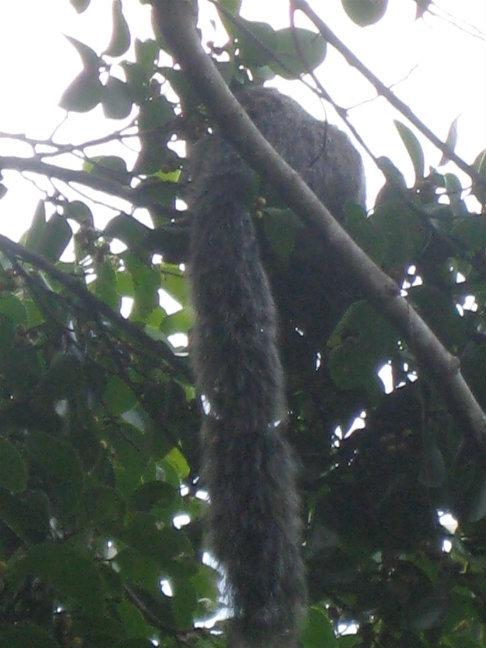 Эта тварь копошилась недалеко на дереве