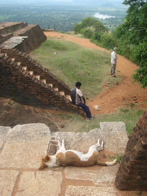 Вездесущие ланкийские собаки и сюда добрались