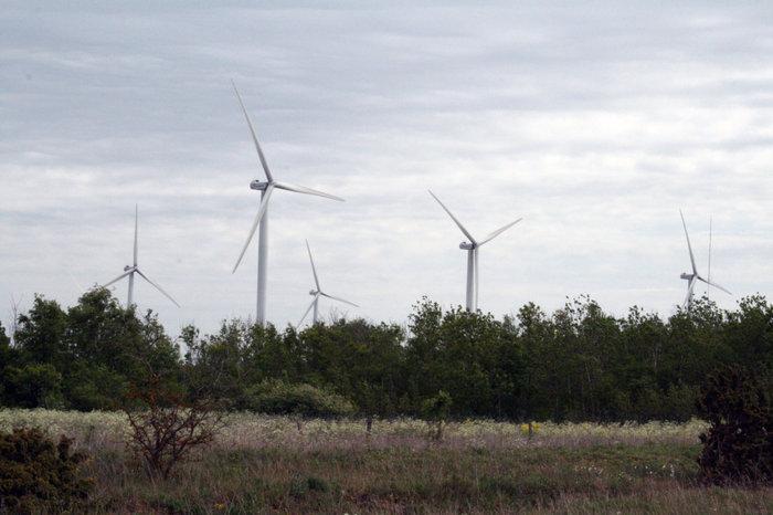 ветряки в Палдиски
