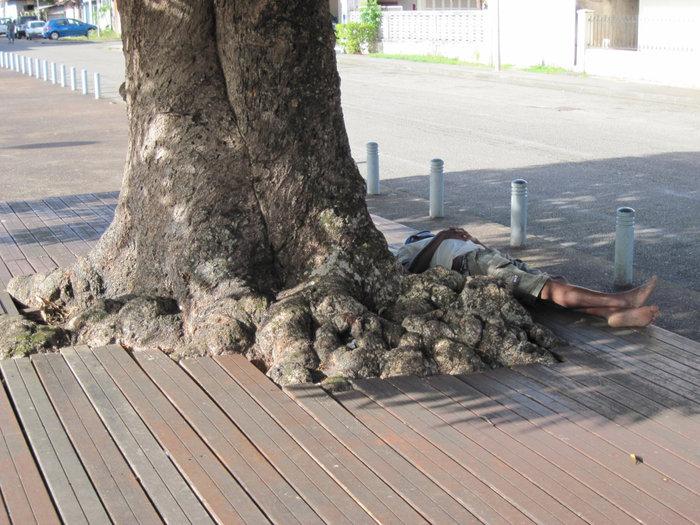 Местные алкоголики — его очень любят Синнамари, Французская Гвиана