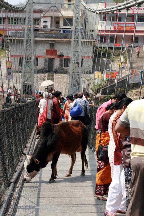 оживленная жизнь на мосту Лакшман-Джула