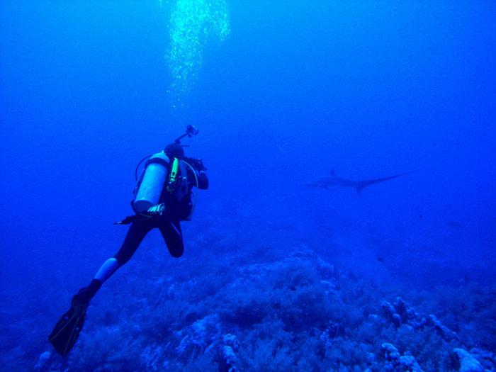 Фотоохотник за акулой Лисой