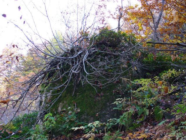09. камень с рододендроном слева от тропы