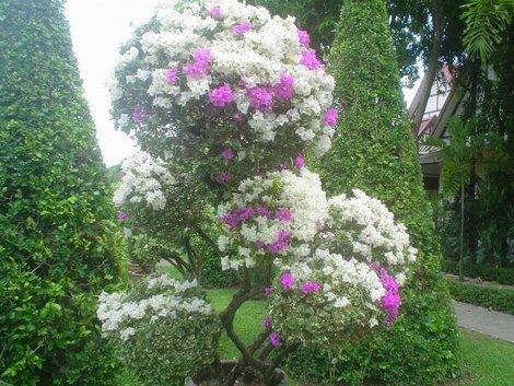 Еще цветочки