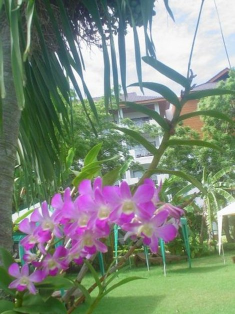 Вид на мой корпус отеля из-под пальмы