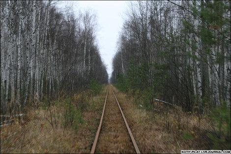 Лес и рельсы