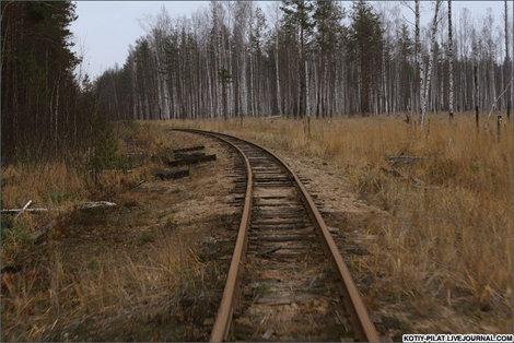 Рельсы и лес