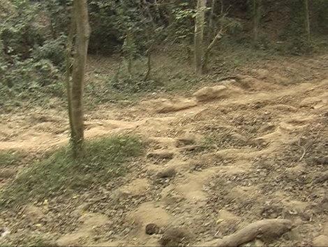 Слоновья тропа
