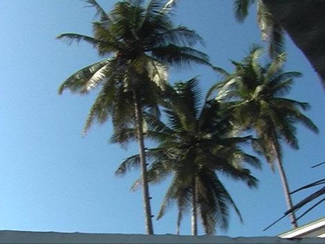Пальмы над ванной