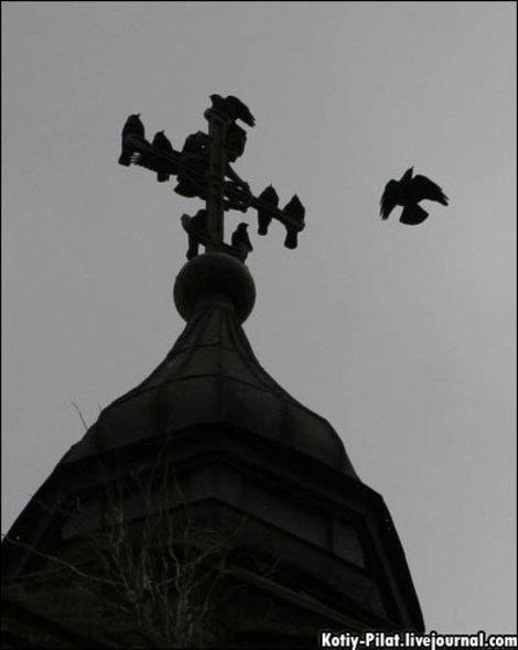 а теперь на крестах сидят вороны