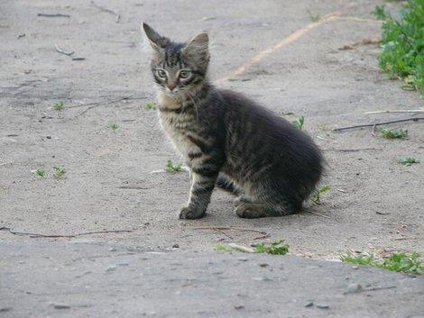 07. Забавный суздальский котенок