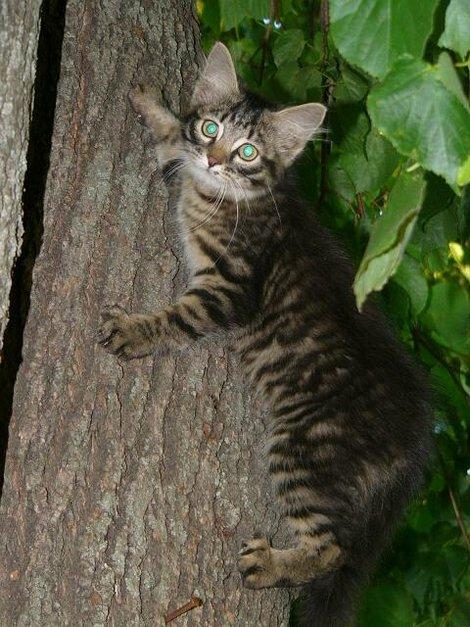 08. Забавный суздальский котенок