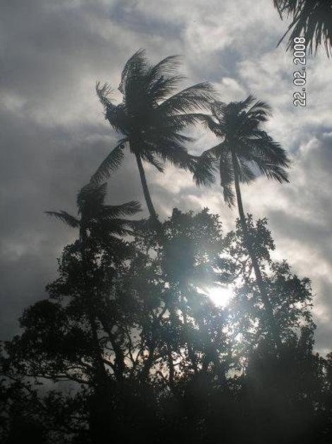 Как-никак, тропики