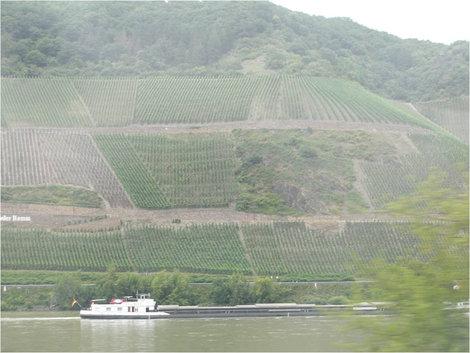 Берега Рейна, покрытые виноградниками