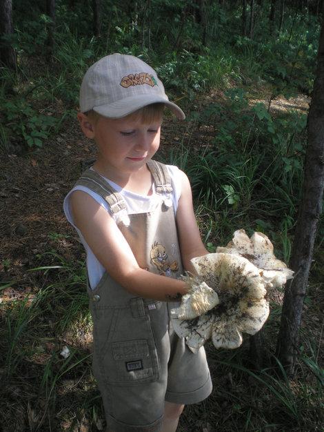 Вот такие здесь грибы!